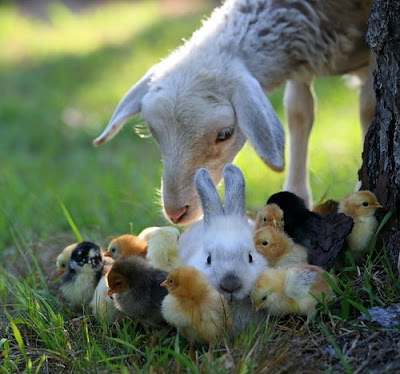 Photo of Baby Animals from contentinacottage.blogspot.com