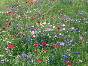 wildflowers-3